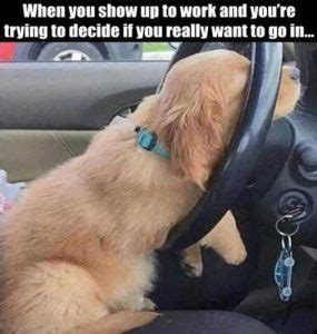 when-you-show-up-to-work-funny-dog-on-steering-wheel #