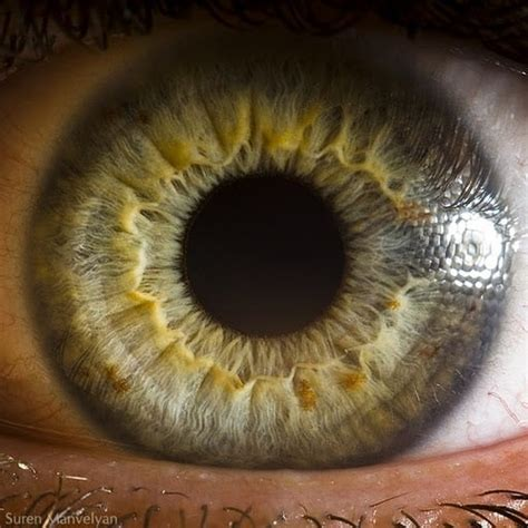 Microscopic Images Of Human Eye Reveals Its Complicated