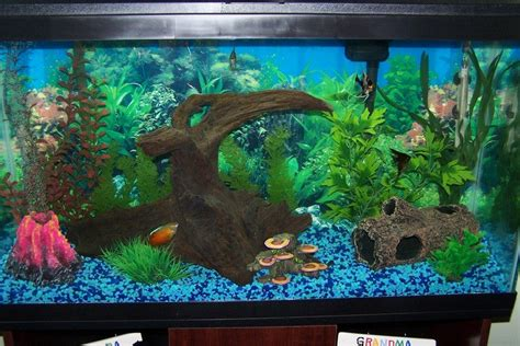Fish Keeping For The Complete Beginner: Part 1 - The