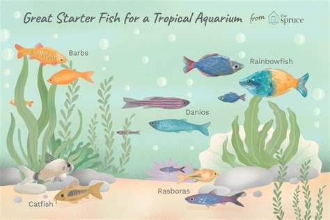 What Type of Fish Should I Get for My First Aquarium?