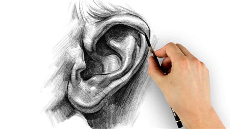 How to Draw Ears – Step by Step   Proko