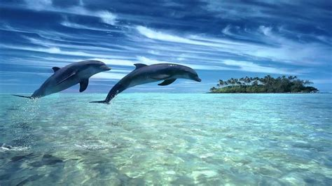 Dolphin Pictures - Kids Search