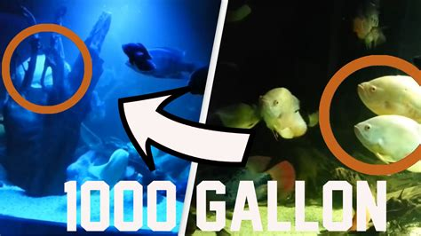 1000 Gallon / 4000 Liter Monster Fish Tank at home with